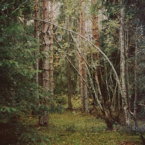 inne i vår skog